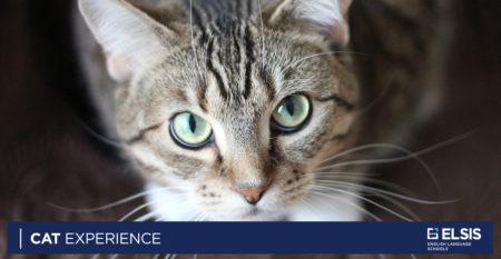 cat experience
